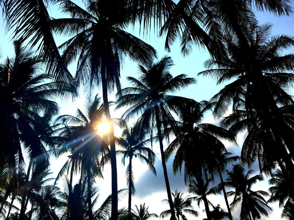 Ko Samui Palmen Strand Sonne